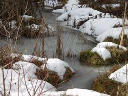 Froschnetz amphibien arten systematische bersicht for Teich im winter
